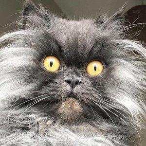 Bobbie the Cat Age, Birthday, Birthplace, Bio, Zodiac &  Family